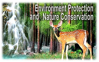 Environmental Conservation Essay